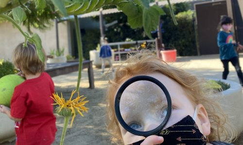 PreK Students Learn About STEM By Exploring Nature